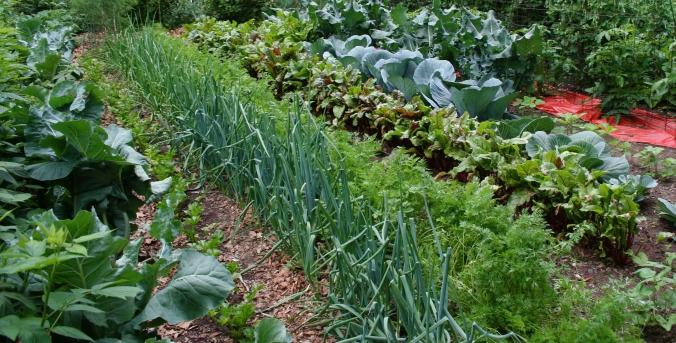 vegetabe-garedning-tips.jpg